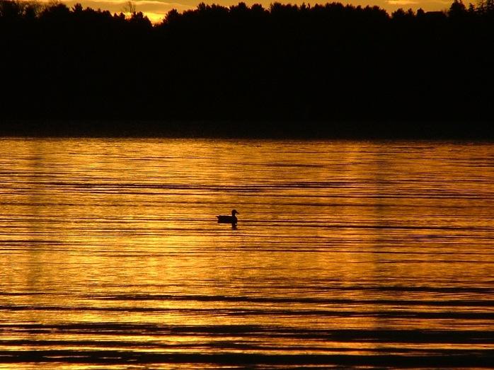 sunrise - November 1st, 2012 - Green Lake
