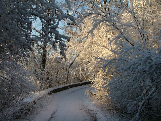 December 10th, 2012, snow, woods, trees, winter 017