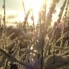 December 10th, 2012, snow, woods, trees, winter020