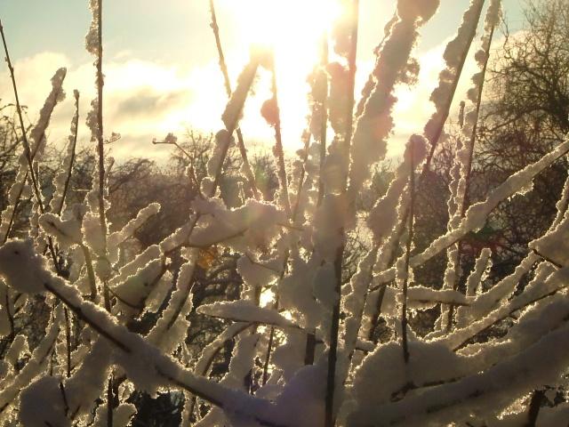 December 10th, 2012, snow, woods, trees, winter 020
