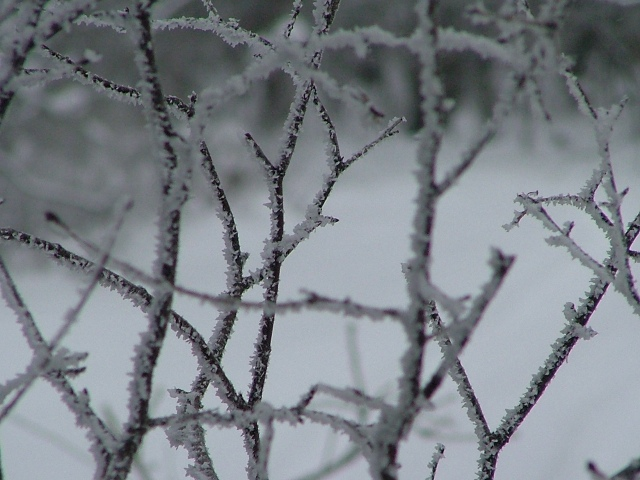 fog and ice, February 9th, 2013, 037