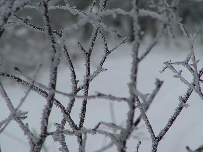 fog and ice, February 9th, 2013, 037