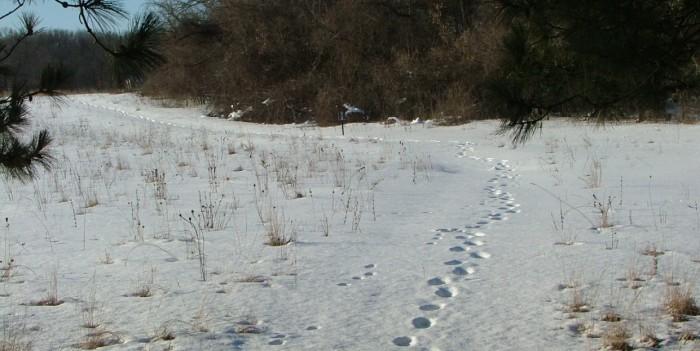snow, February 15th, 2013, Green Lake, Paths 051