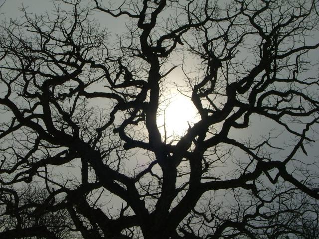 pain tree 004