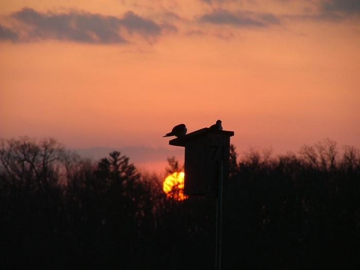 april 27th, 2013 sunrise, birds, benches 010
