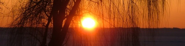 sunrise, weeping willow
