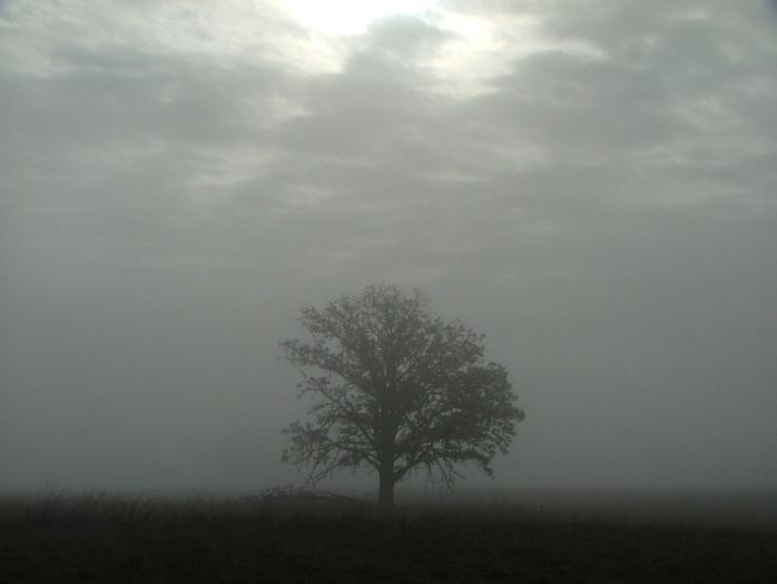 fog, April 1th, 2013 025
