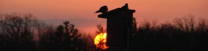 cropped-april-27th-2013-sunrise-birds-benches-010.jpg
