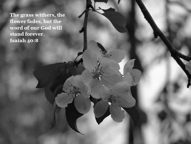 Isaiah 40;8