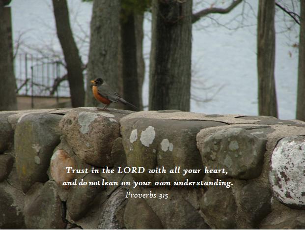 Robin on wall, proverbs 3;5