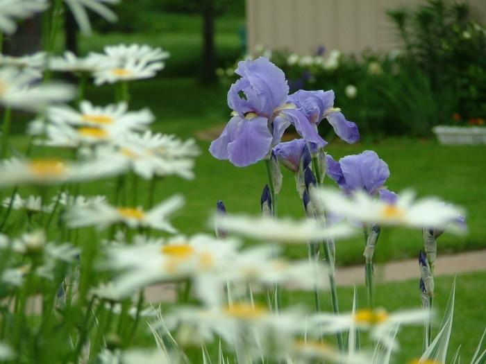 flowers June 001