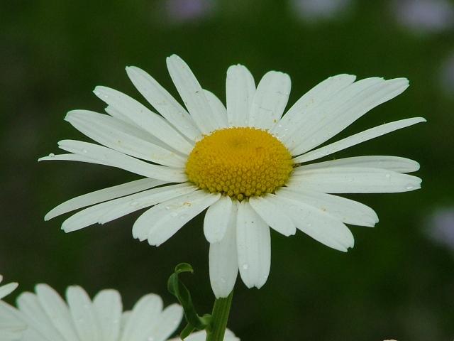 flowers June 003