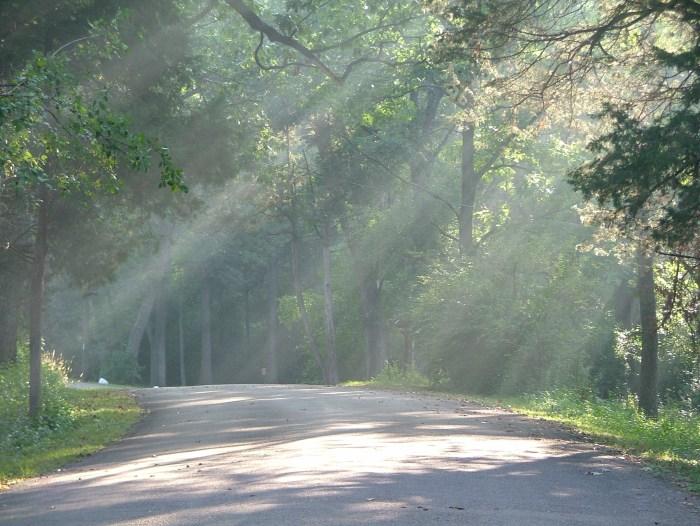 fog, illuminating light, paths, woods 9-2013 012