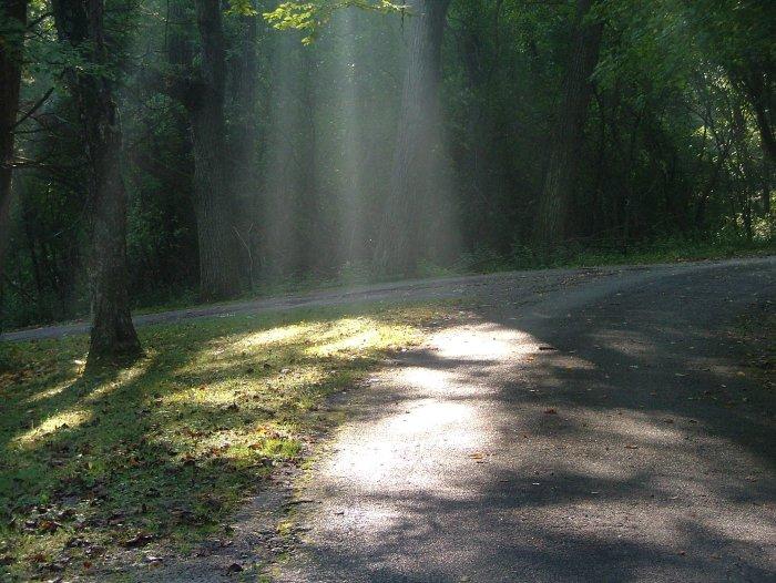fog, illuminating light, paths, woods 9-2013 014