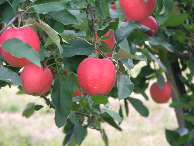 nature, September, orchard 034