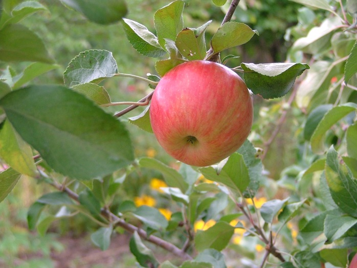 nature, September, orchard 036