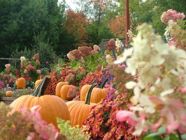 nature, September, orchard 043
