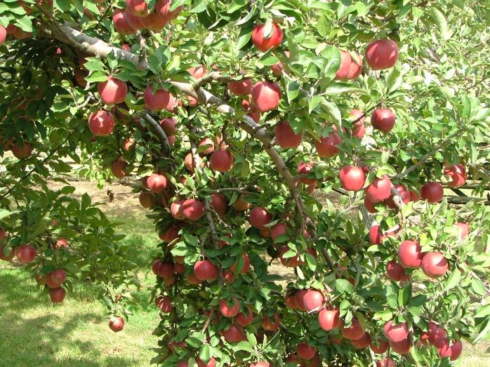 nature, September, orchard 056