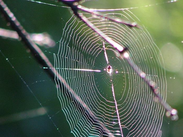 spider webs 002