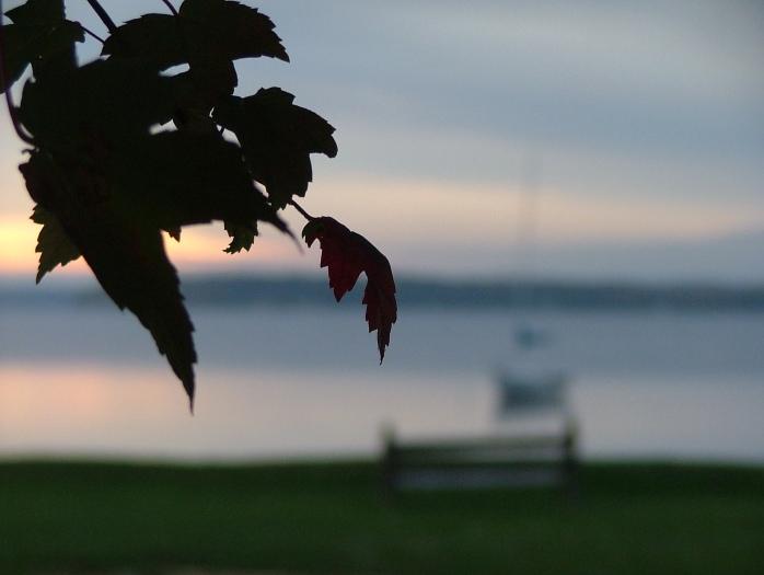leaves, 006