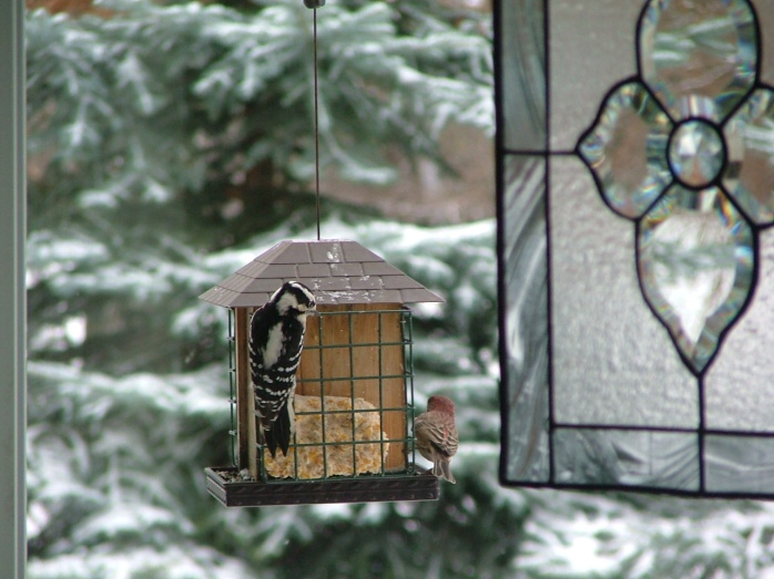 birds in first snow 003
