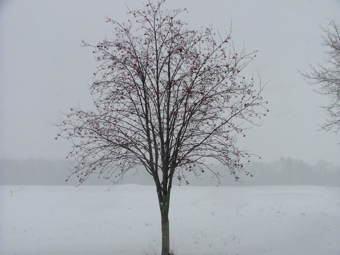snowy morning 003