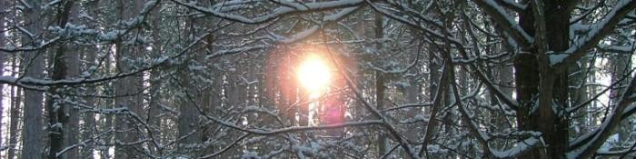 cropped-snowy-february-morning-0091.jpg