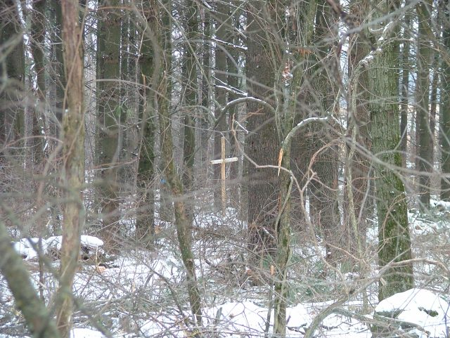 cross in woods February 2014 002