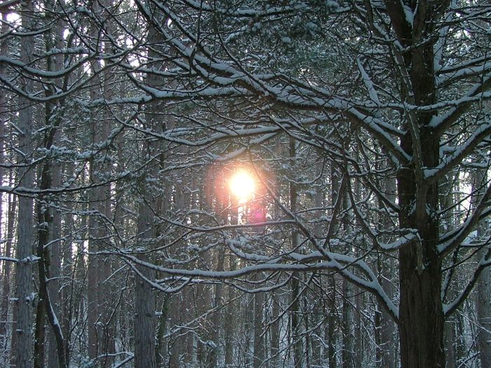 snowy February morning 009
