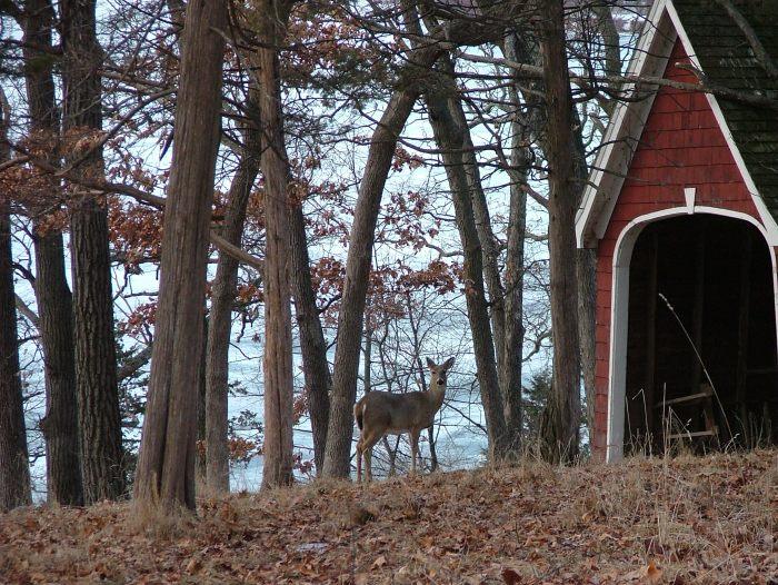 beautiful sunrise, fox, deer, March 2014 030