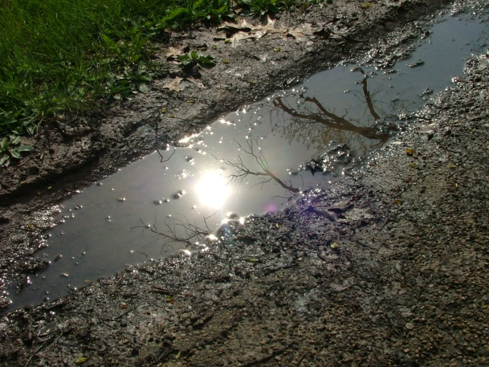 puddles in May 002
