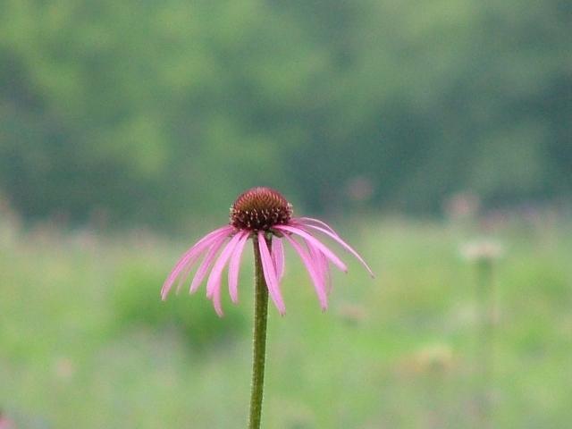 summer flowers 009