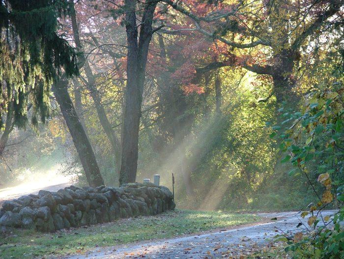 fall morning 009