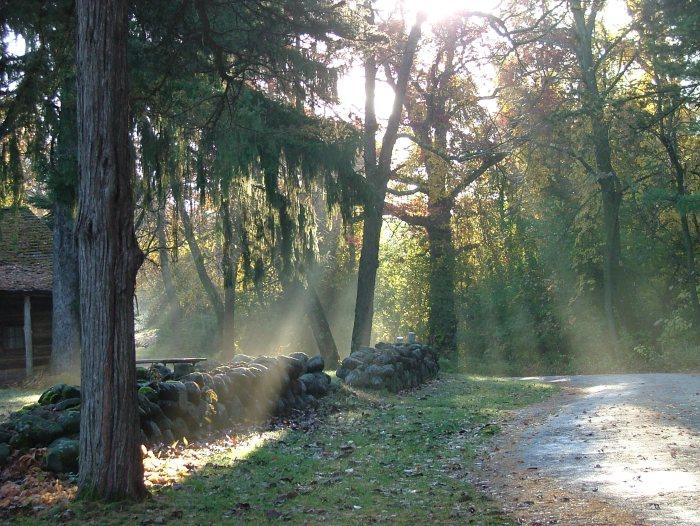 fall morning 010