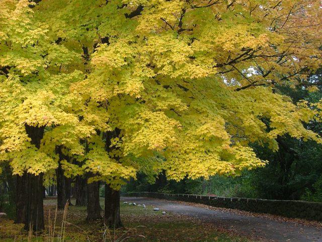 fall lake, leaves, paths 014